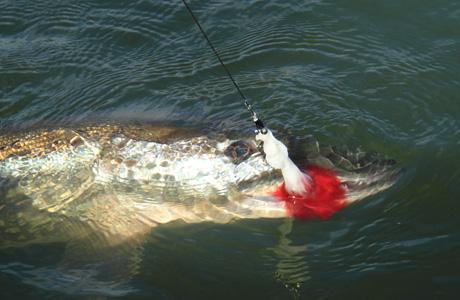hauenperhokalastus