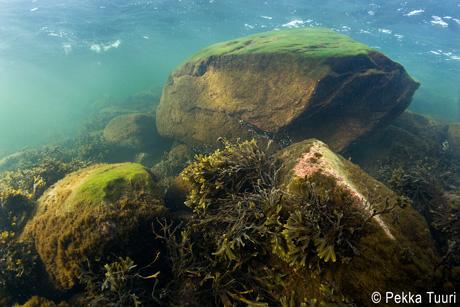 Suolapulssi Itämeri