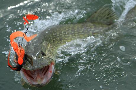 Hiidenvesi Kalastus