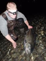 Jotkut Lohista muistuttivat tonnikaloja. Kuva J.Repo (campbell)