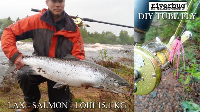 Tomin reilu 15 kiloinen lohi omasitomalla riverbug putkiperholla! #tornionjoki #matkakoski #putkiperhot #lohi #lohenkalastus #riverbug #oulu #tornio #perhonsidonta #tubfluga #salmon #lax
