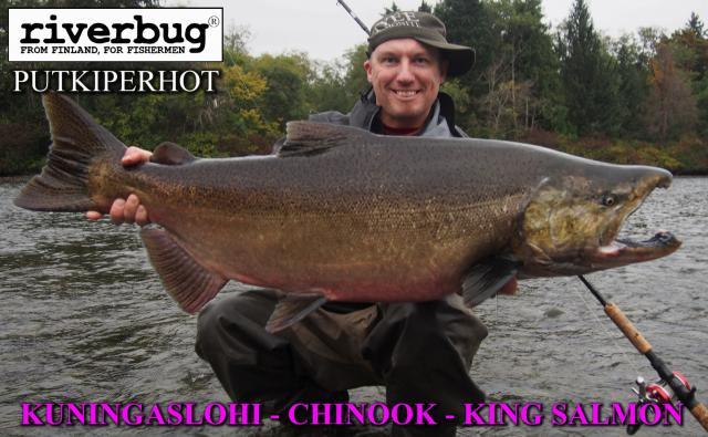 Putkiperhot by RiverBug - Chinook - Kuningaslohi