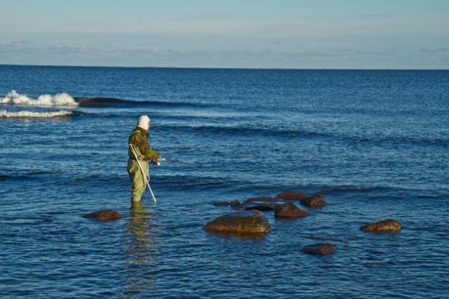 Meritaimenen kalastusta Gotlannissa
