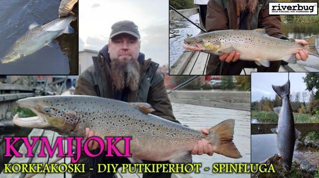 Kymijoki - Korkeakoski - DIY Putkiperhot - Spinfluga. #putkiperhot #kymijoki #korkeakoski #lohi #riverbug #bugiperhot