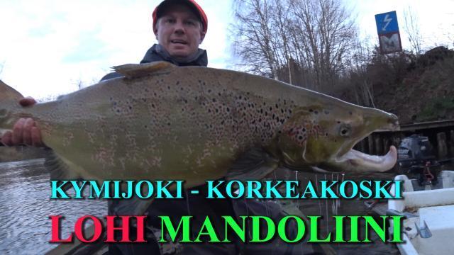 Kymijoki Lohi RR-vaapulla. #kymijoki #korkeakoski #lohi #konna #isolohi #lohenkalastus #kotka #rrvaappu #rrwobbler #korkkari #lax #riverbug #riverranger