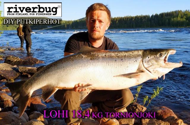 Lohi 18,4 kg RiverBug DIY Putkiperhot - Kattilakoski - Tornionjoki