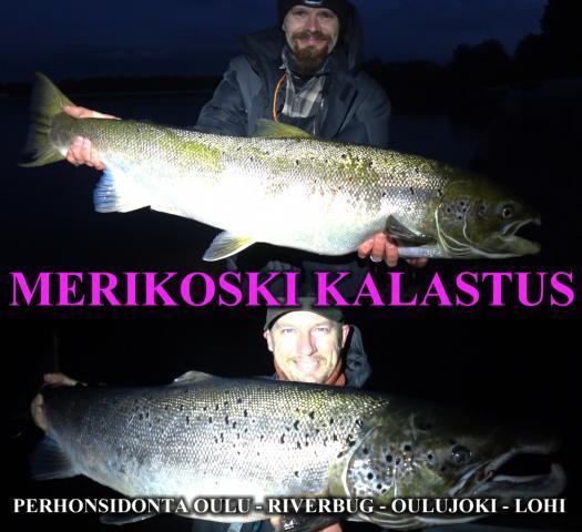 Arton ensimmäinen lohi Merikoskesta ja Rangerin bugiperhojen testikalaa :D #putkiperhot #oulu #merikoski #lohi #kalastus #oulukalastus #merikoskikalastus