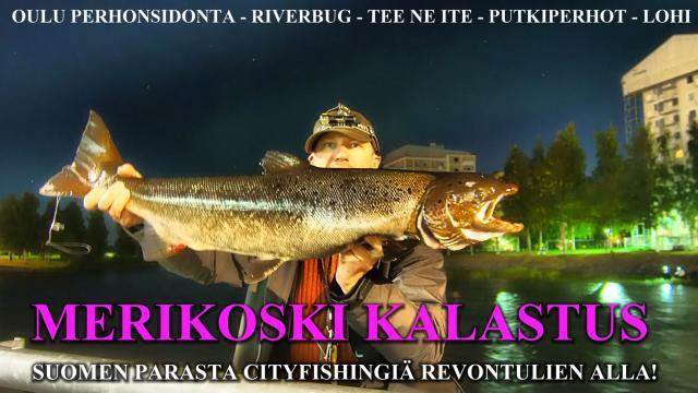 Merikoski - Oulu - Merikoski kalastus - Lohenkalastus - Putkiperhot - Perhonsidonta. #oulu #putkiperhot #riverbug #merikoski #lohi #cityfishing #oulujoki #hartaanselkä #lohenkalastus #kalastusopas #fishingguide #spinfluga #tiura #tiurauistin