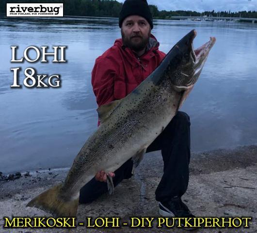 Merikosken lohi RiverBugiin sidotulla putkiperholla! #oulu #riverbug #merikoski #lohi #putkiperhot #beggar #ketunkarvat #oulujoki #perhonsidonta