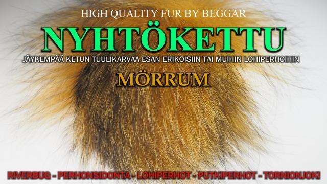 Nyhtökettu Mörrum - Oulu Perhonsidonta - Ketunkarvat.#mörrum #mustakettu #ketunkarvat #oulu #tornionjoki #putkiperhot #riverbug #beggar
