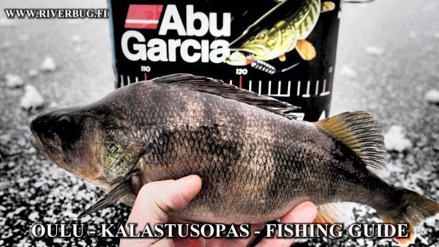 Kalastusopas Oulu - Fishing Guide Oulu - River Ranger