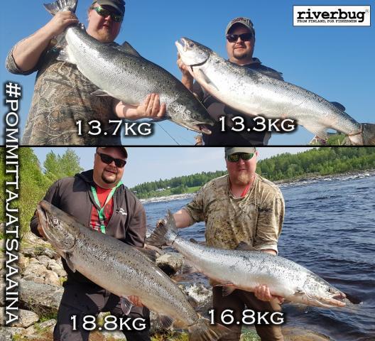#putkiperhot #putkiperho #perhonsidonta #riverbug #lohi #salmon #lohiperhot