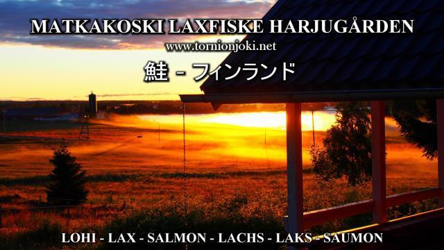 Tornionjoki Kalastusopas - Fishing guide Matkakoski