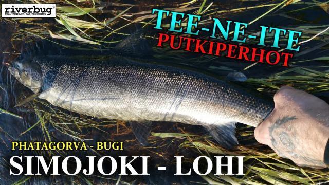 Simojoki Perhokalastus - phatagorva putkiperho ja lohi. #riverbug #perhokalastus #simojoki #putkiperhot #perhonsidonta