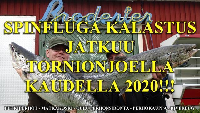 Tornionjoki Spinfluga kalastus - Punttikalastus jatkuu. #tornionjoki #spinfluga #putkiperhot #matkakoski #lohenkalastus #lohi #harjugården #tubfluga #laxfiske