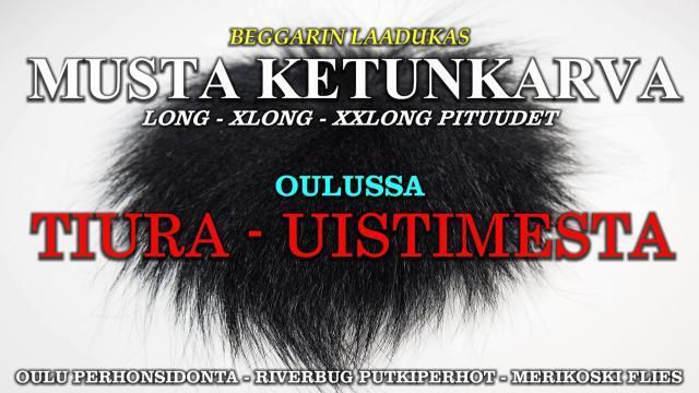 Mustaa kettua Oulussa Tiura uUistimesta! #mustakettu #ketunkarvat #foxfur #beggar #riverbug #oulu #perhonsidonta