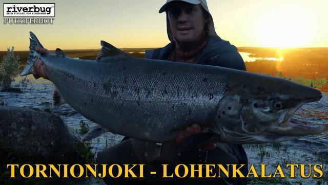 Tornionjoki Lohi. #tornionjoki #putkiperhot #riverbug #lohi