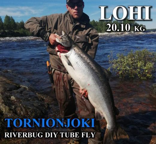 Tornionjoki ja Matkakoski antoi 20 kiloisen lohen Samille! #koura #tornionjoki #matkakoski #riverbug #lohi #putkiperhot #oulu #perhonsidonta #maasaari #monttu #spinfluga #merikoski #oulu #diy