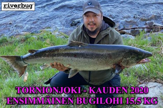 Tornionjoki kauden avauslohi 2020! Matkakoski lohenkalastus. #tornionjoki #matkakoski #putkiperhot #lohi #lohenkalastus #riverbug