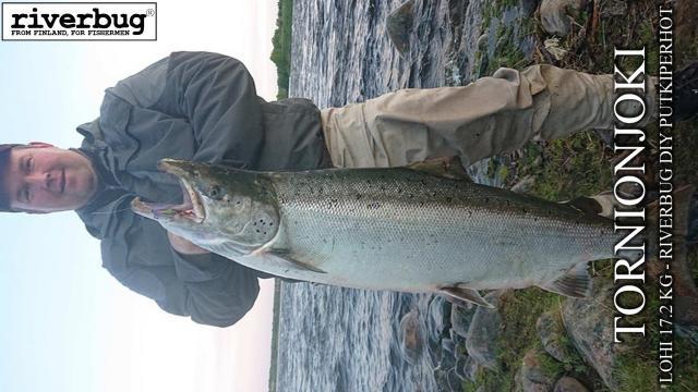 Tornionjoki lohi 17.2 kg - Sivuvinopönö :D Merikoski Oulu - Kauden 2020 ensimmäinen lohi riverbug putkiperholla! #tornionjoki #matkakoski #riverbug #lohi #putkiperhot #oulu #perhonsidonta #maasaari #monttu #spinfluga #merikoski #oulu #tiurauistin