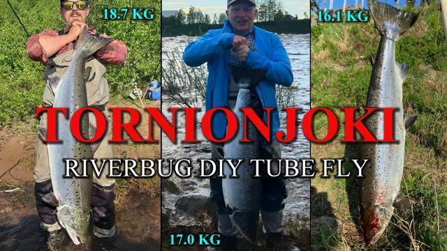 Tornionjoki ja matkakoski ja pari uuden ennätyksen saanutta kalamiestä :) #tornionjoki #matkakoski #riverbug #lohi #putkiperhot #oulu #perhonsidonta #maasaari #monttu #spinfluga #merikoski #oulu #diy