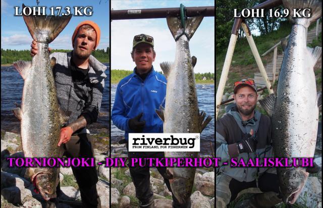 Tornionjoki - Matkakoski - Lohenkalastus - Putkiperhot by RiverBug. #tornionjoki #putkiperhot #lohiperhot #campbellriversalmonfly #laksefluer