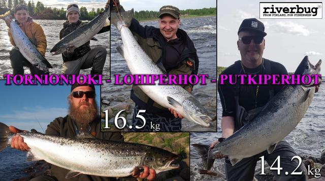 Tornionjoki - Putkiperhot - Lohiperhot. #tornionjoki #putkiperhot #lohiperhot #spinfluga #riverbug