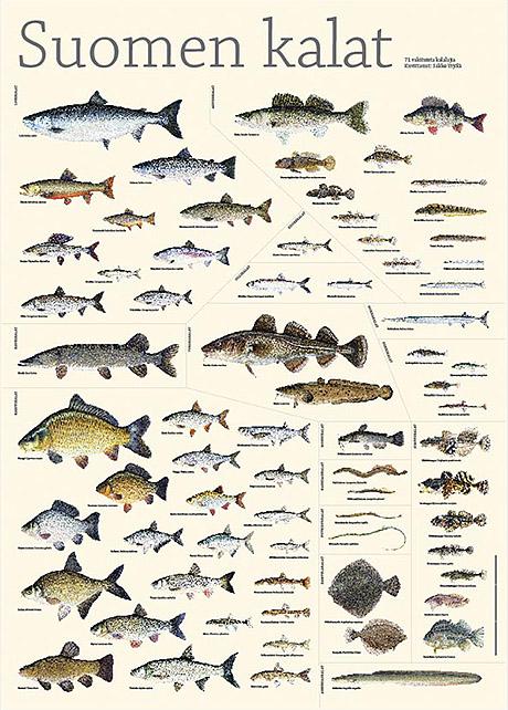 aikuisviihde suomi horoskooppimerkki kalat